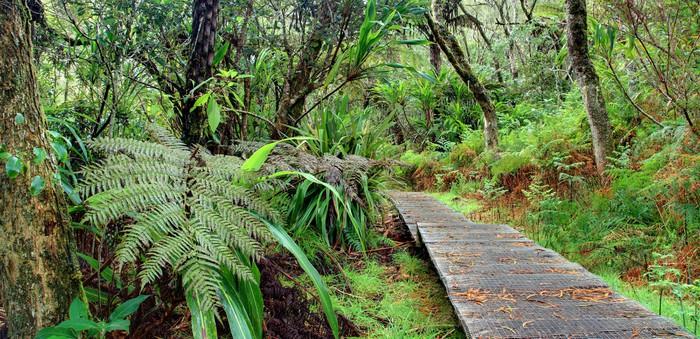 Papier Peint Vinyle Randonnée en forêt tropicale. - Vacances
