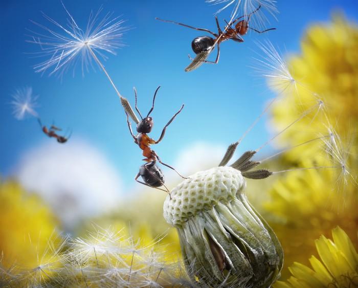 Vinylová Tapeta Mravenci létající deštníky - semena pampelišky, ant příběhy - Imaginární zvířata