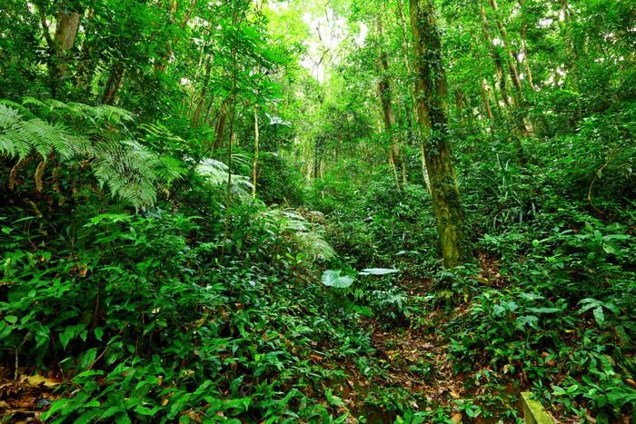 Papier Peint Vinyle Tropical Rainforest Paysage - Thèmes
