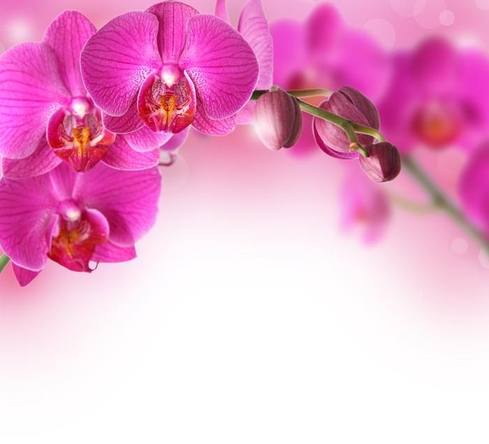 fototapete orchideen design grenze mit kopie raum pixers. Black Bedroom Furniture Sets. Home Design Ideas