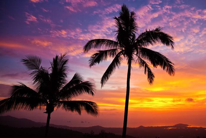 Vinylová Tapeta Palmy na pozadí krásný západ slunce - Nebe