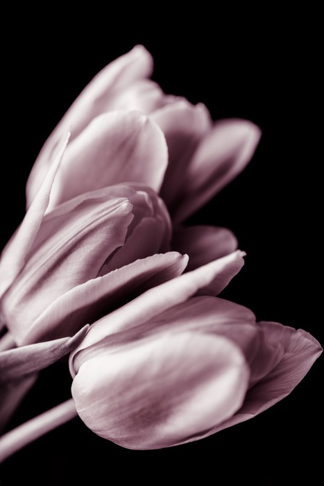 Vinylová fototapeta Tulips - Vinylová fototapeta