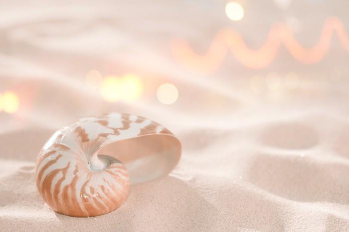 Vinylová fototapeta Nautilus shell na pláži písek a tropické zlaté sluneční světlo s - Vinylová fototapeta