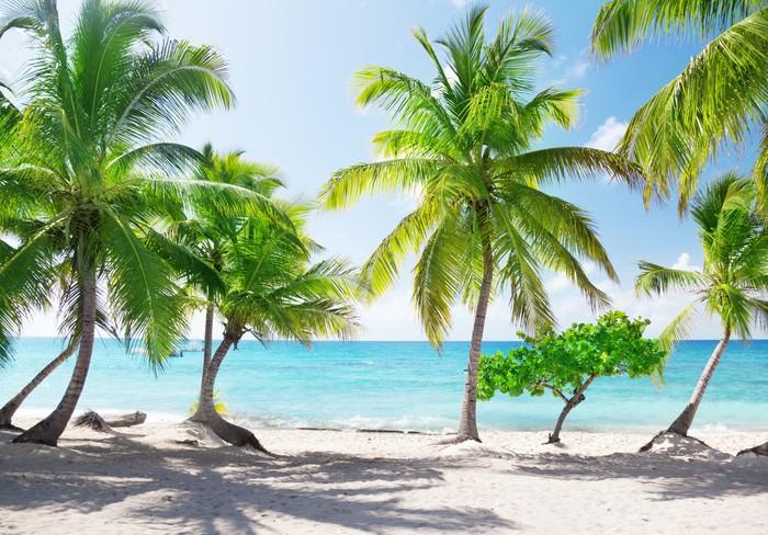 Vinylová Tapeta Catalina Island v Dominikánské republice - Témata