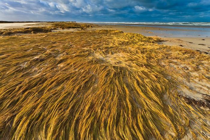 Vinylová Tapeta Přímořské s duna tráva při západu slunce - Ostrovy