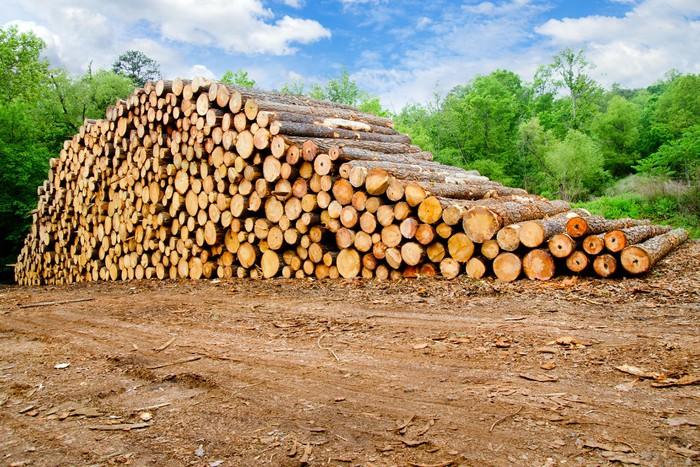 Vinylová Tapeta Borovice dřevo naskládané na důlního řeziva - Zemědělství