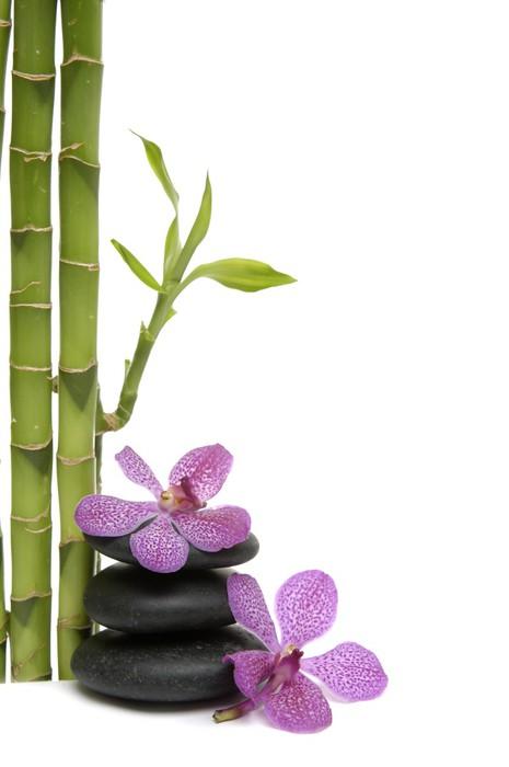 Vinylová Tapeta Bamboo Grove a větve orchidej na oblázky -