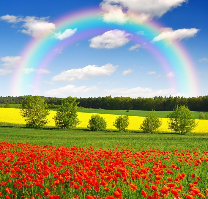 Rainbow Above The Spring Landscape With Red Poppy Field