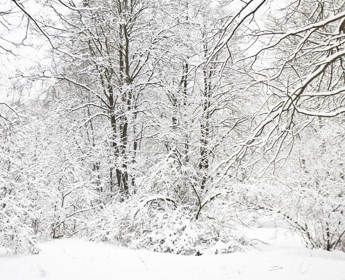 Papier peint hiver paysage pixers nous vivons pour - Papier peint paysage ...