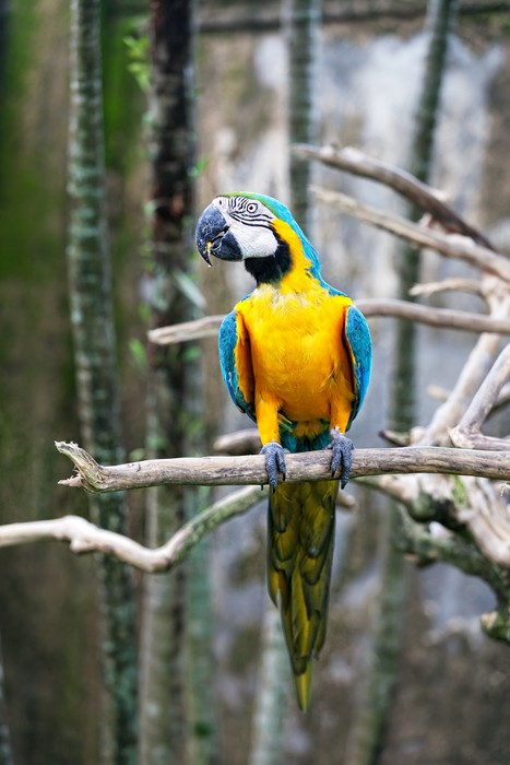 Vinylová Tapeta Barevné Parrot sedí na větvi - Ptáci