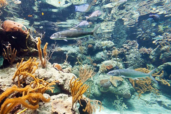 Vinylová Tapeta Ryby v Karibském moři, Mexiko - Ryby