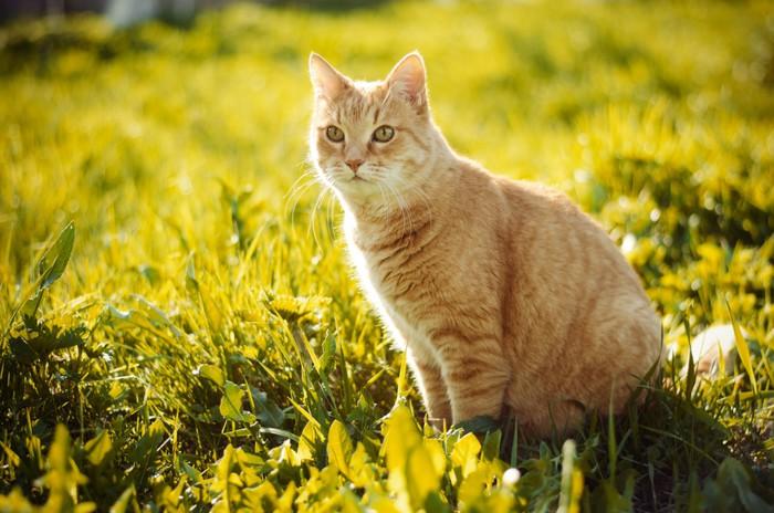 Vinylová fototapeta Рыжий кот в траве - Vinylová fototapeta