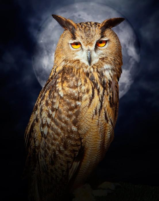 Vinylová Tapeta Bubo bubo výr velký noční pták úplňku - Témata