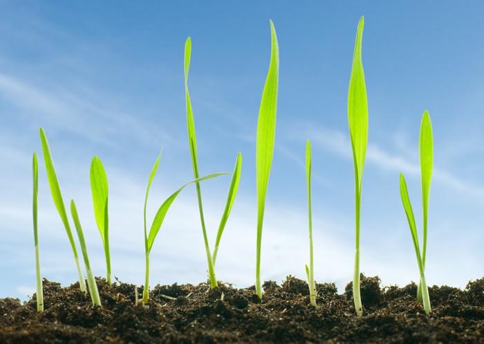 Vinylová Tapeta Rostliny proti obloze - Přírodní krásy