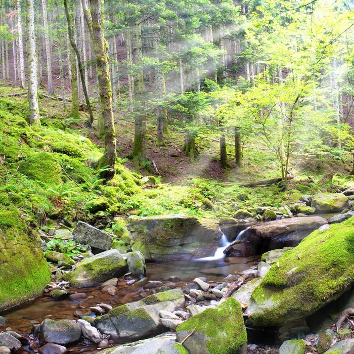 Vinylová Tapeta Malá řeka s několika vodou v lese - Voda