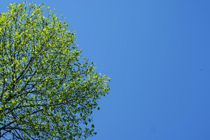 Vinylová Tapeta Zelený strom a modrá obloha - Roční období