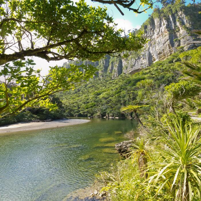 papier peint for t tropicale verdoyante le long pororai river nouvelle z lande pixers nous. Black Bedroom Furniture Sets. Home Design Ideas