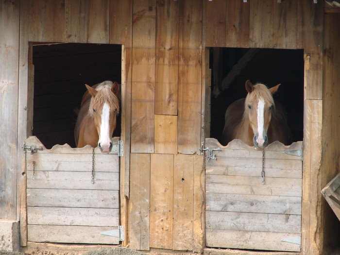 Horses In Barn Wall Mural Pixers 174 We Live To Change