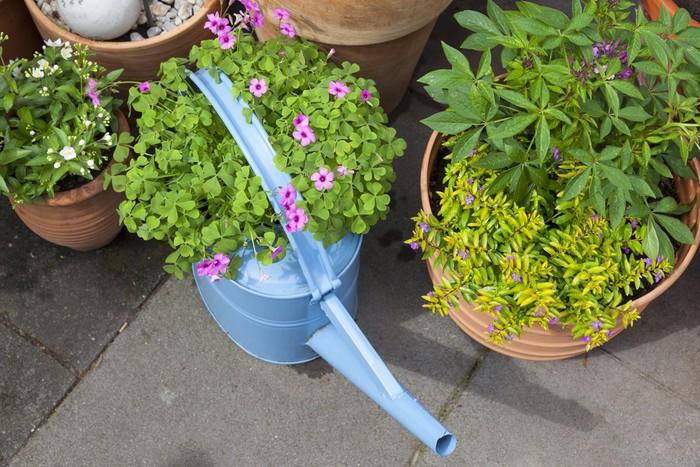 Vinylová Tapeta Dekorace auf der Terrasse mit alter Gießkanne und Blumentöpfen - Domov a zahrada