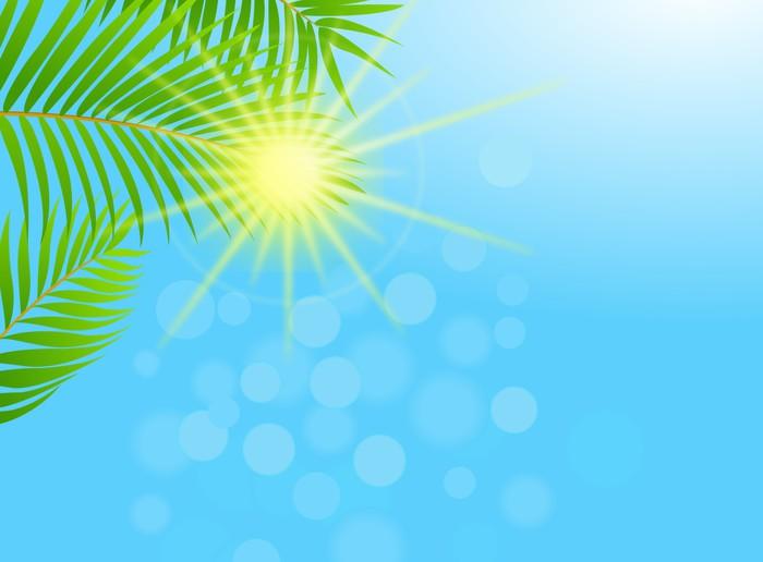 Vinylová Tapeta Palm tree background - Stromy