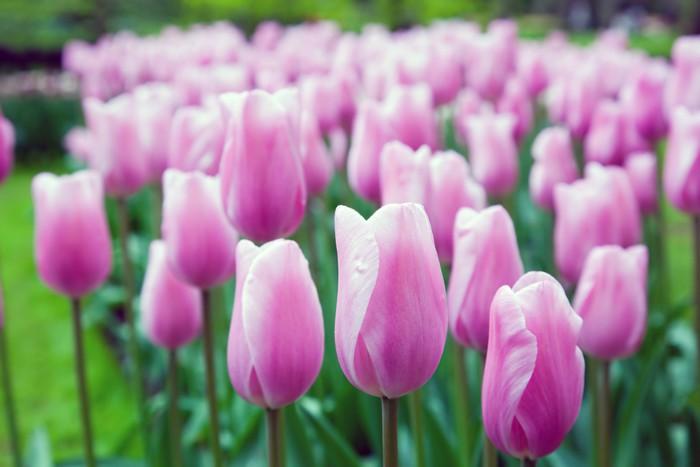 Romantyczne różowe kwiaty na wiosnę