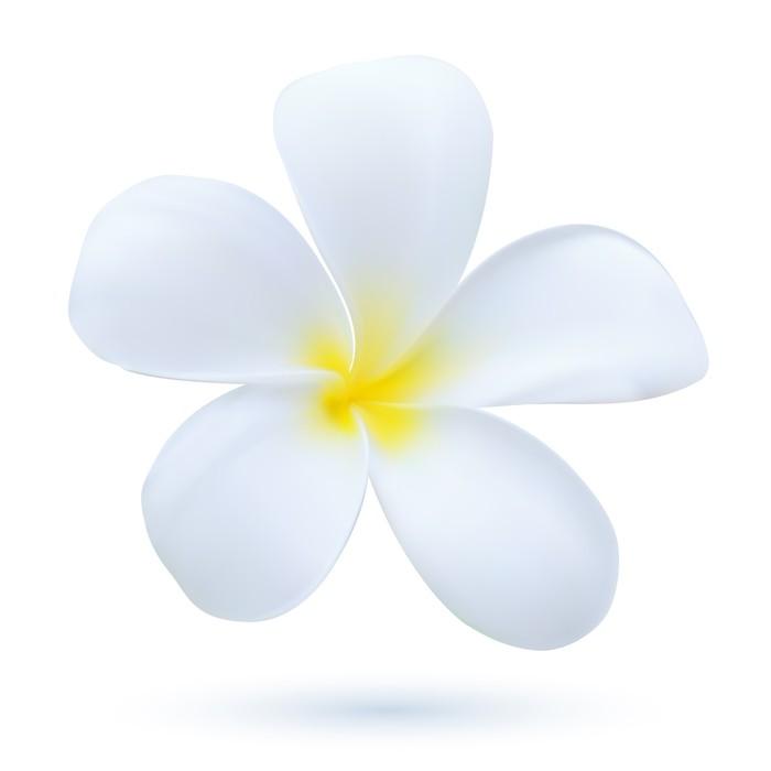 Hawaii flower frangipani white tropical plumeria pixerstick sticker flowers