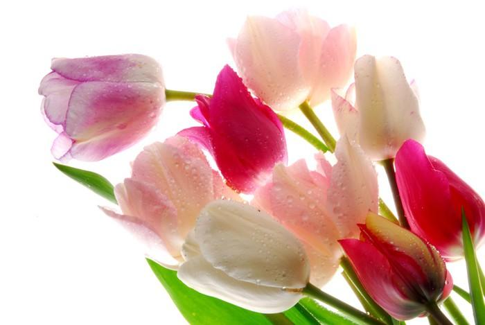 Vinylová Tapeta Kytice tulipánů květiny - Květiny