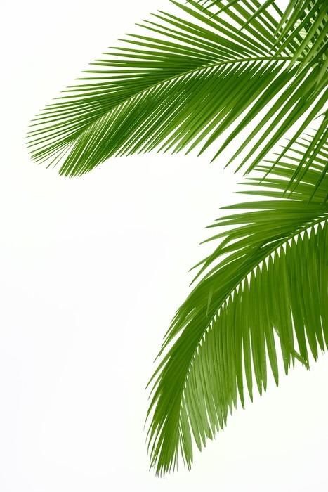 Vinilo Pixerstick Hojas de palmera • Pixers® - Vivimos para cambiar