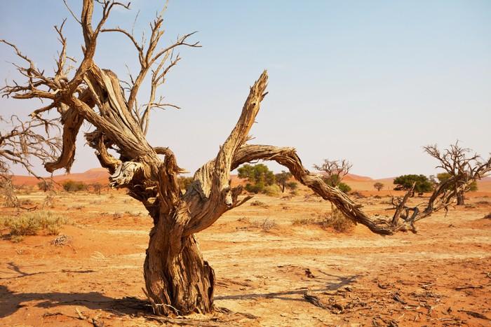 Vinylová Tapeta Namib - Pouště