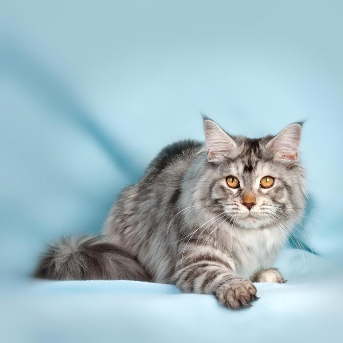papier peint chat pixers nous vivons pour changer. Black Bedroom Furniture Sets. Home Design Ideas