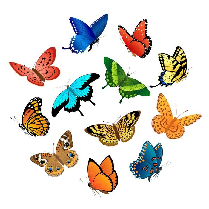 Vinylová Tapeta Létající motýli - Témata