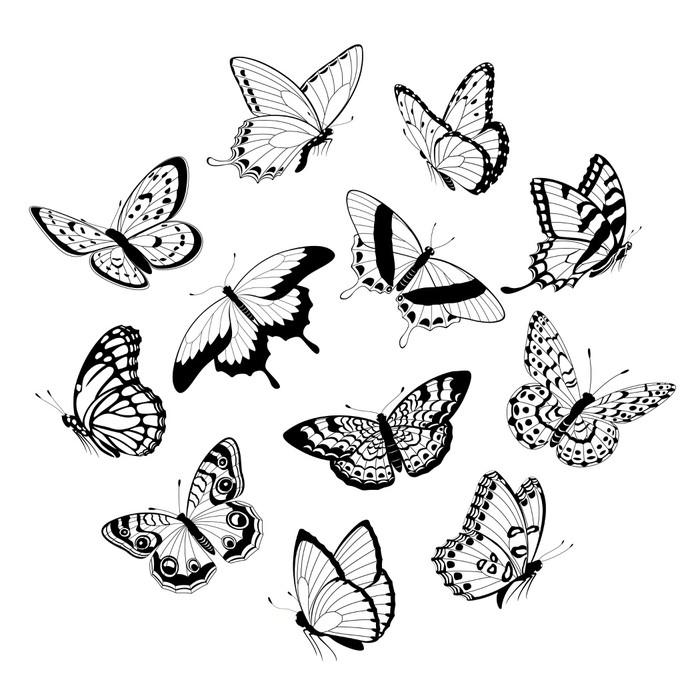 Fototapeta Létající černobílé motýly • Pixers® • Žijeme pro změnu