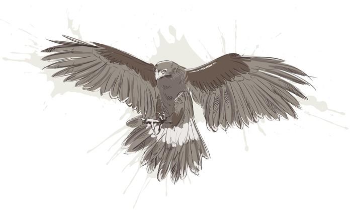 Szkic wektor orła