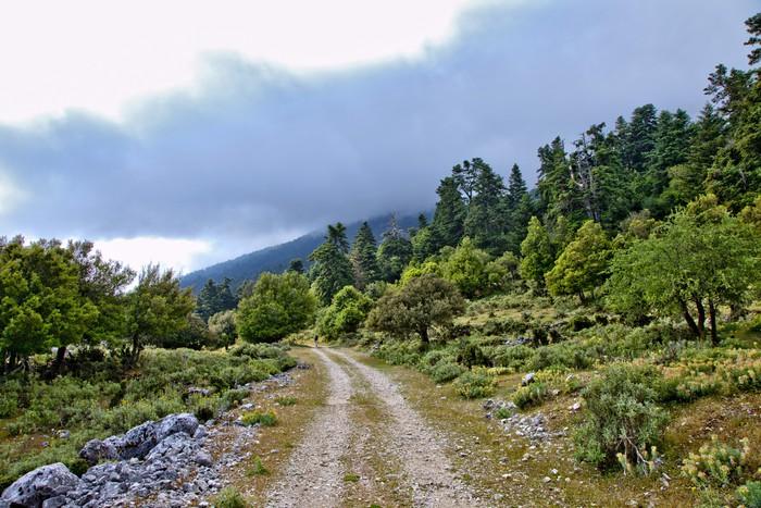 Vinylová Tapeta Grèce; ioniennes, kefalonia: mont Enos, Sentier de Montagne - Evropa