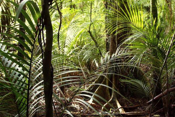 Carta Da Parati Foresta Tropicale : Carta da parati giungla foresta tropicale u2022 pixers® viviamo per il