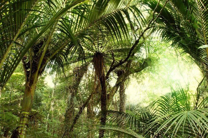 Vinylová Fototapeta Tropické džungle - Vinylová Fototapeta