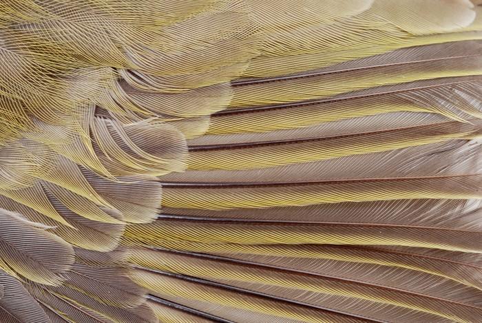 Vinylová Tapeta Makro pták peří - Ptáci