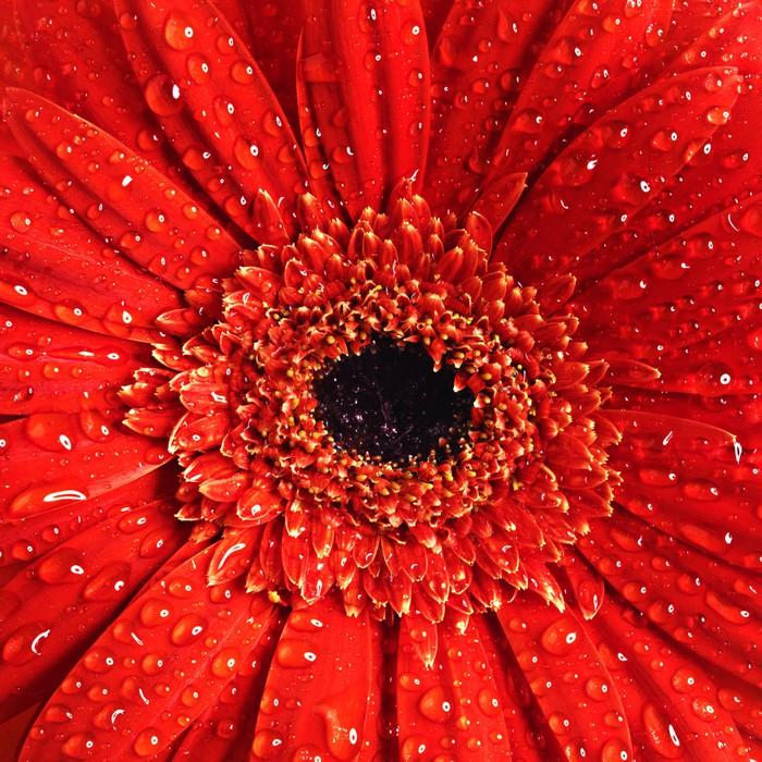 Vinylová Tapeta Krásné květinové pozadí - Témata