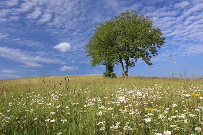 Vinylová Tapeta Couleurs de printemps à la campagne - Venkov