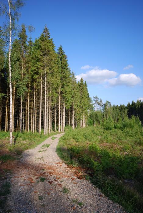 Vinylová Tapeta Wald-Landschaft (Schweden) - Evropa