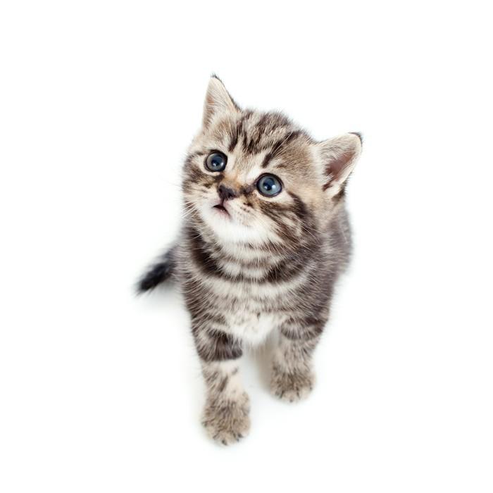 aufkleber draufsicht auf junge katze isoliert auf wei em hintergrund pixers wir leben um. Black Bedroom Furniture Sets. Home Design Ideas