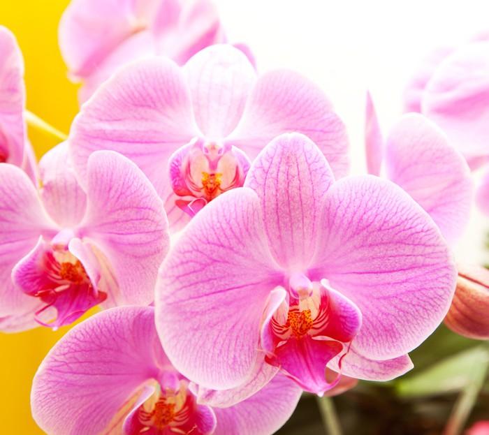 Vinylová Tapeta Orchidea - Témata