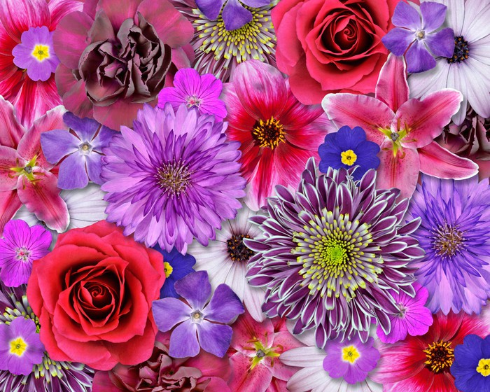 Red pink purple flower background wall mural pixers we live red pink purple flower background wall mural pixers we live to change mightylinksfo