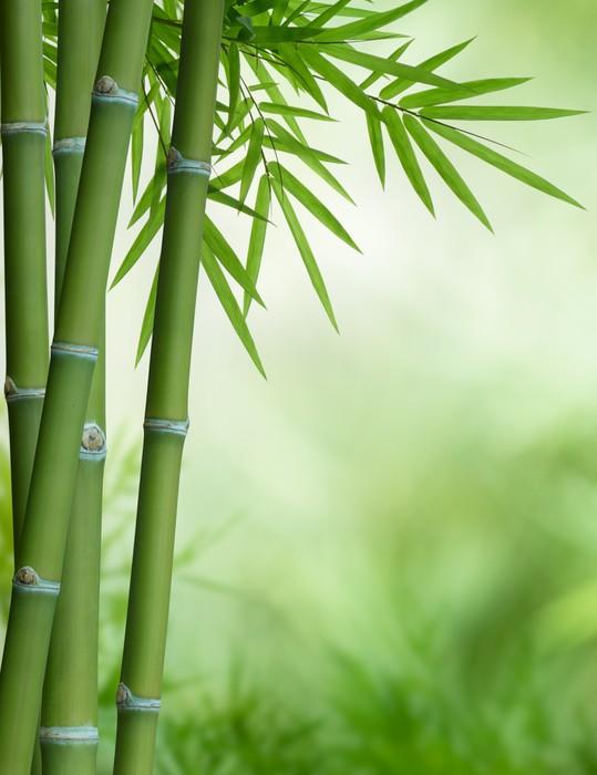 tableau sur toile arbre de bambou avec des feuilles pixers nous vivons pour changer. Black Bedroom Furniture Sets. Home Design Ideas