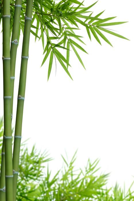 fototapeta bambus z liś�mi � pixers174 � Żyjemy by zmienia�