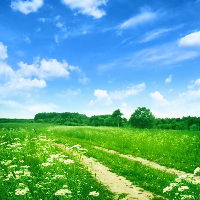 papier peint route de campagne dans le domaine de la fleur sous le ciel bleu pixers nous. Black Bedroom Furniture Sets. Home Design Ideas