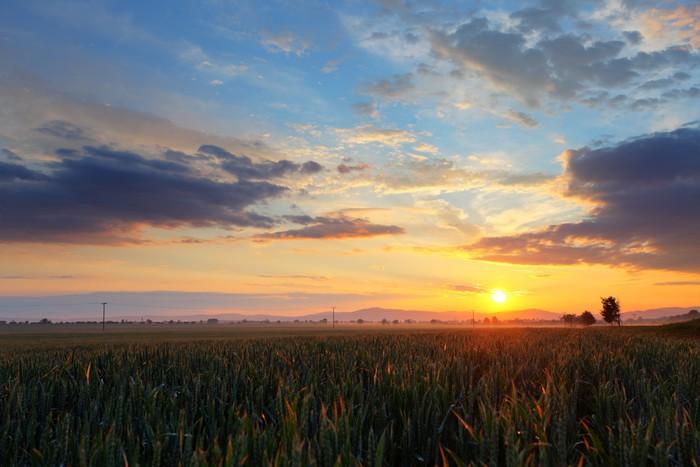 Vinylová Tapeta Západ slunce nad pšeničné pole. - Zemědělství