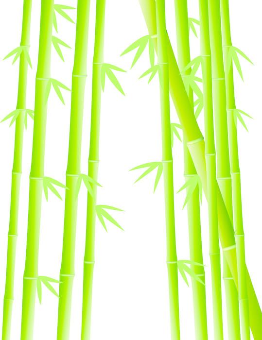 Vinylová Tapeta Bamboo strom na pozadí - Rostliny