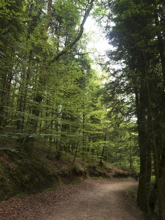 Vinylová Tapeta Armorica Regionální přírodní park. Bretana - Prázdniny