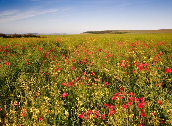 Vinylová Tapeta Maková pole krajina anglickém venkově v létě - Roční období